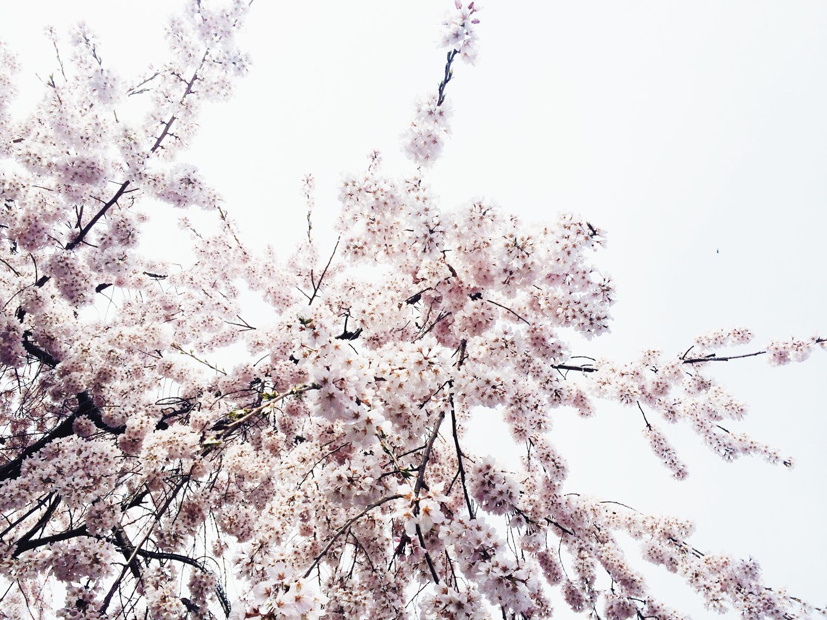 写真-2015-03-28-11-02-32